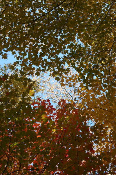 Photograph - Shadow Canopy by Dylan Punke