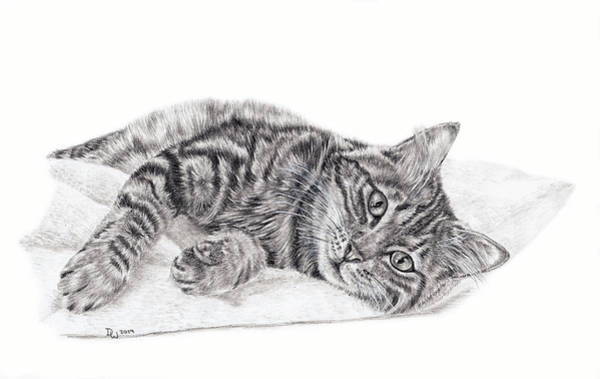 Drawing - Shadow by Pencil Paws
