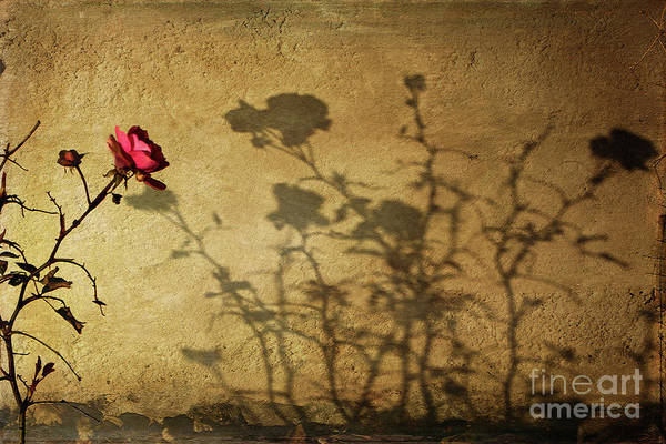 Photograph - Shadowcast  by Liz Alderdice