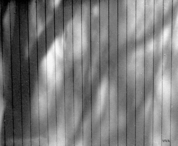 Photograph - Shadowland by VIVA Anderson