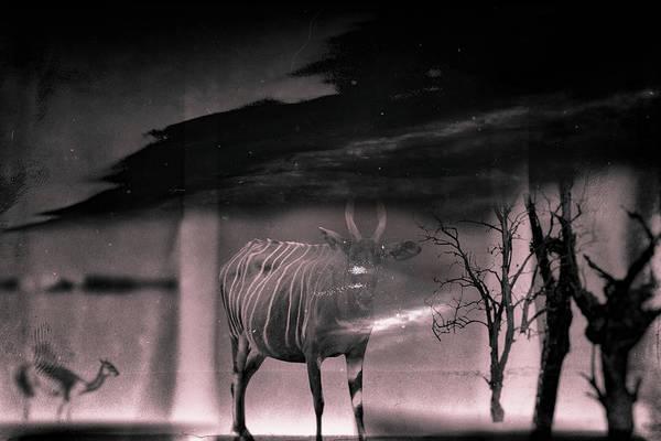 Wall Art - Photograph - Shadowlands by Rabiri Us