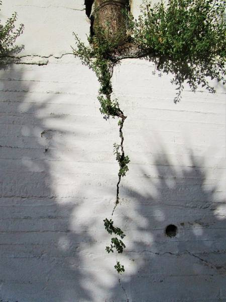 Photograph - Shadows And Cracks by Rosita Larsson