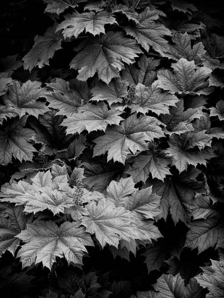 Photograph - Shadows And Leaves by Steven Clark
