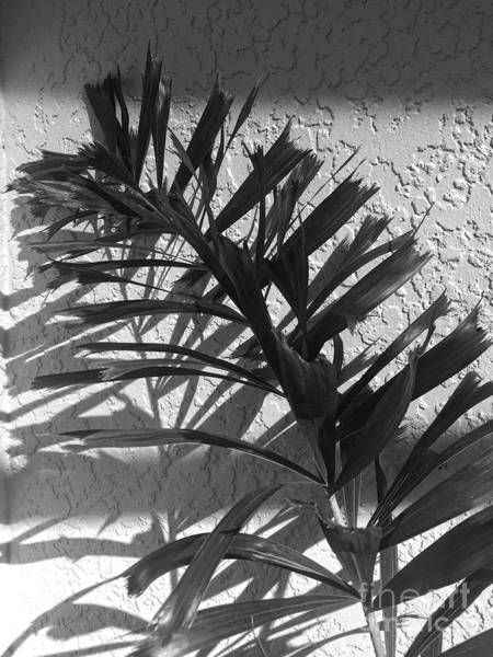 Photograph - Shadows Of Palm by Christine Dekkers