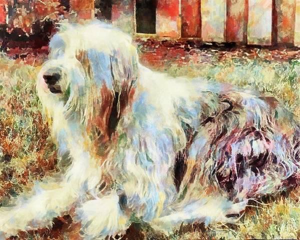 Digital Art - Shaggy Dog by Mario Carini