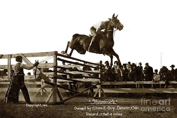 Photograph - Shamrock  High Jump 7feet 4 Inchsowned By Chas. E. Guy. Denver,  by California Views Archives Mr Pat Hathaway Archives
