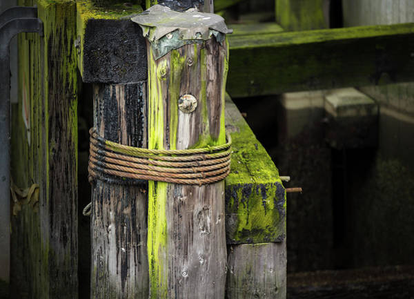Photograph - Shape And Green Rot No. 2 by Juan Contreras