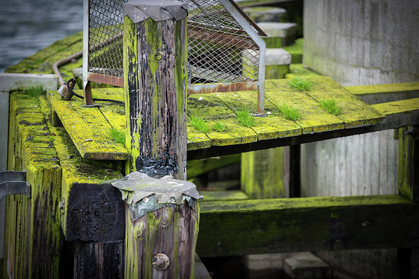 Photograph - Shape And Green Rot No. 3 by Juan Contreras