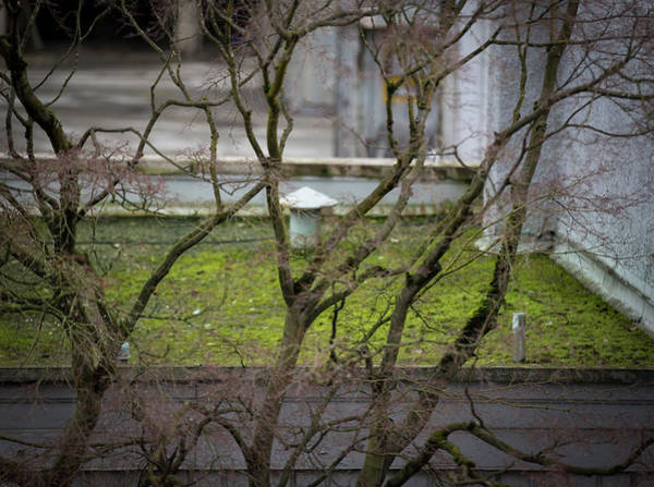 Photograph - Shape And Green Rot No.17 by Juan Contreras