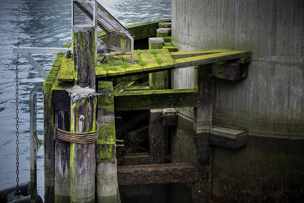 Photograph - Shape And Green Rot No.4 by Juan Contreras