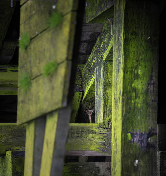 Photograph - Shape And Green Rot No.6 by Juan Contreras