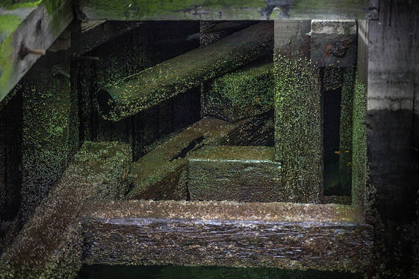 Photograph - Shape And Green Rot No.7 by Juan Contreras
