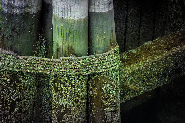 Photograph - Shape And Green Rot No.8 by Juan Contreras