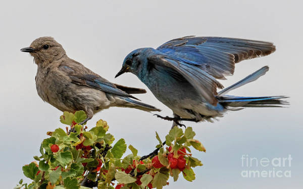 Wall Art - Photograph - Sharing A Perch by Mike Dawson