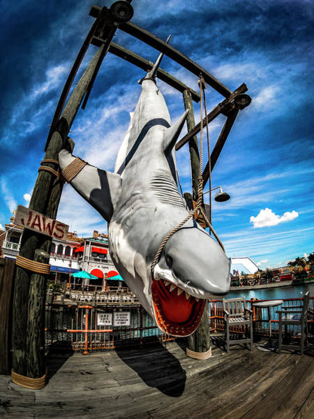 Photograph - Shark Catch by Carlos Diaz