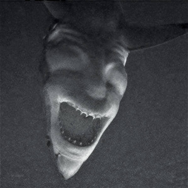 Photograph - Shark Devil B W by Rob Hans