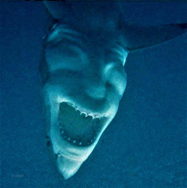 Photograph - Shark Devil by Rob Hans