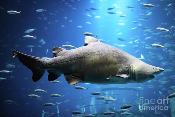 Wall Art - Photograph - Shark Swimming Underwater by Michal Bednarek