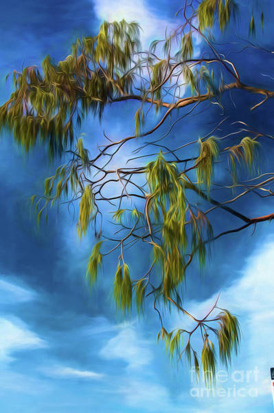 Wall Art - Photograph - She Oak Leaves by Sheila Smart Fine Art Photography