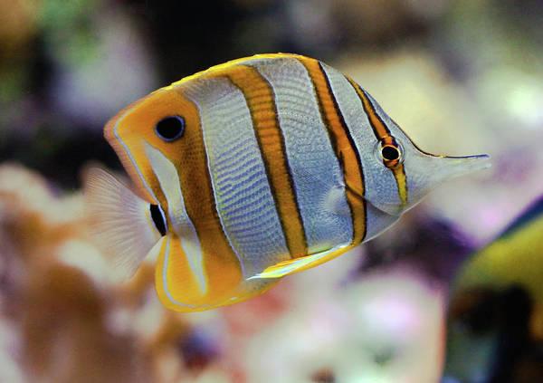 Fish Tank Photograph - Shedd Aquarium by Nate Gautsche