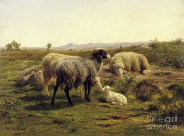 Wall Art - Painting - Sheep And Lambs, 1866 by Rosa Bonheur