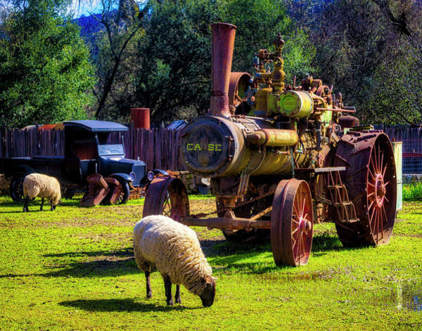 Wall Art - Photograph - Sheep And Old  Steam Tractor by Garry Gay