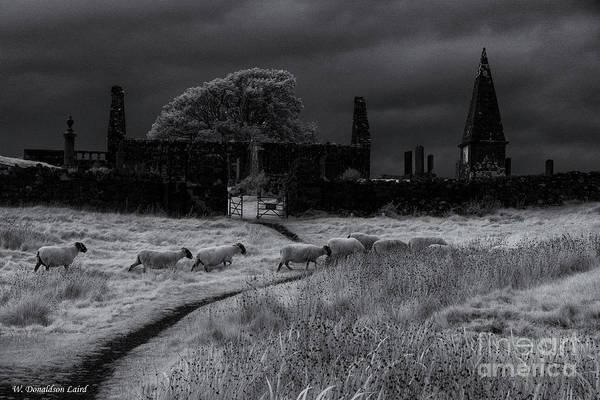 Church Of Scotland Wall Art - Photograph - Sheep Crossing by Wendi Donaldson Laird