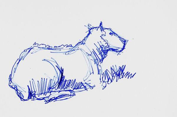 Drawing - Sheep Drawing - Biro Sketch En Plein Air by Mike Jory