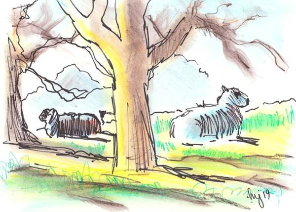 Drawing - Sheep Lying Down Under Trees Morning Sun by Mike Jory