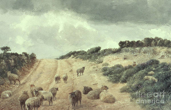 Wall Art - Painting - Sheep On The Surrey Hills by Richard Beavis