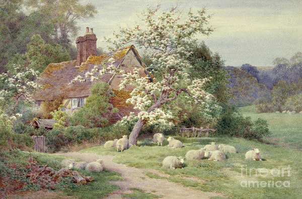 Barnyard Animal Painting - Sheep Outside A Cottage In Springtime by Charles James Adams