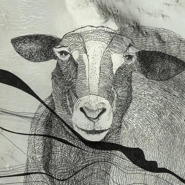Illustration Digital Art - Sheep by Tanya Johnston Illustration & Design