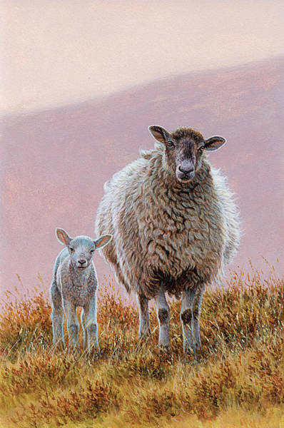 Terrain Digital Art - Sheep With Lamb In Moorland by Andrew Hutchinson