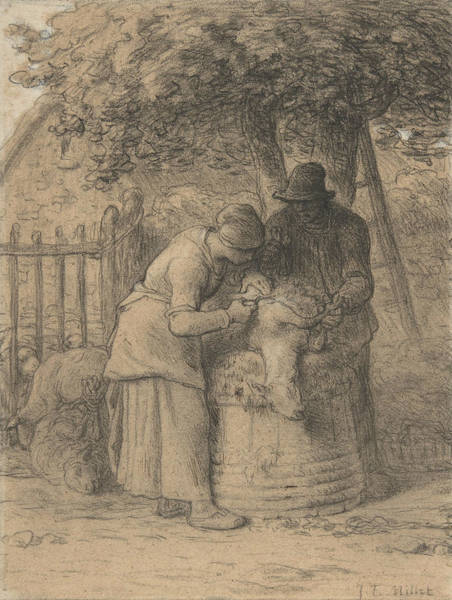 Drawing - Sheepshearing Beneath A Tree by Jean-Francois Millet