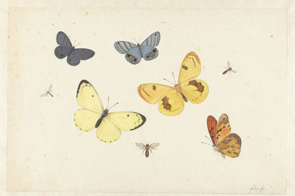 Wall Art - Painting - Sheet Of Studies With Five Butterflies by MotionAge Designs