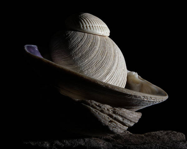 Photograph - Shell Abstract by Richard Rizzo