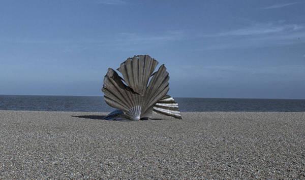Wall Art - Photograph - Shell Art by Martin Newman
