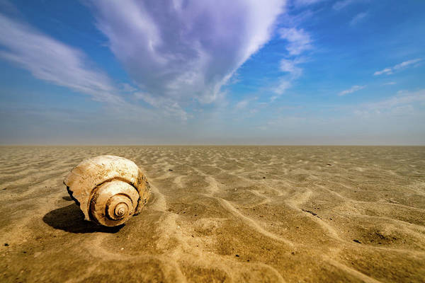 Photograph - Shell At Hunting Island by Joye Ardyn Durham