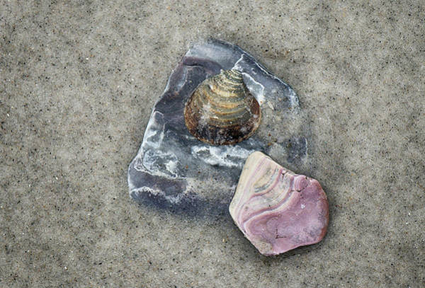 Photograph - Shell Collection by Cate Franklyn