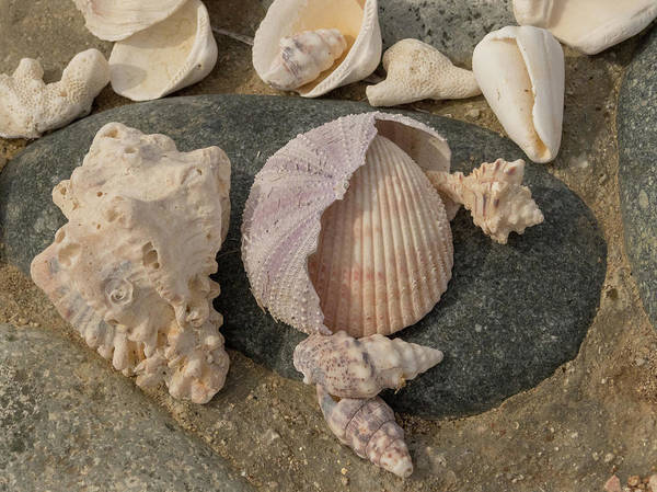 Wall Art - Photograph - Shell Collection by Jean Noren