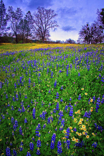 Photograph - Shell Creek Blues With A Pop Of Yellow - Superbloom 2019 by Lynn Bauer