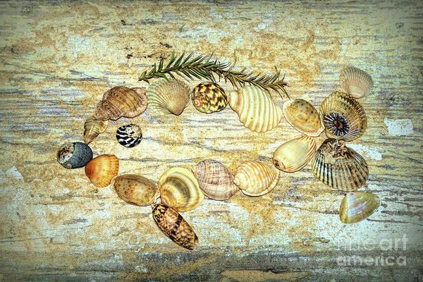 Wall Art - Photograph - Shell Fish 2 By Kaye Menner by Kaye Menner