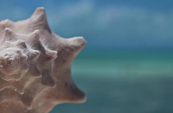 Undersea Photograph - Shell by Gizet Gonzalez