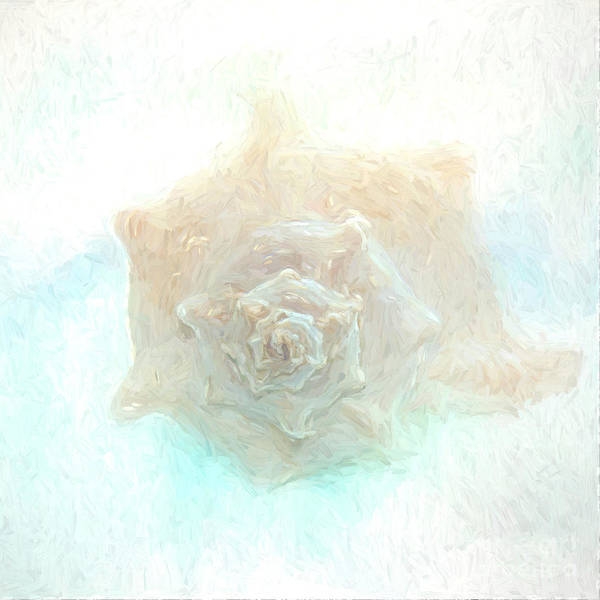 Photograph - Shell-painterly by Pam  Holdsworth