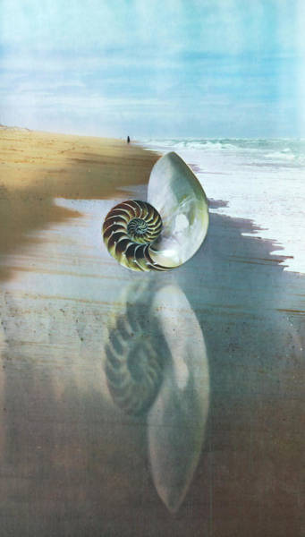 Digital Art - Shell Reflections In The Sand In Nautical Blues by Debra and Dave Vanderlaan