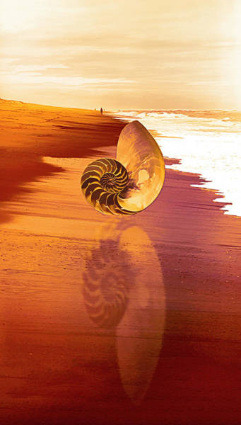 Photograph - Shell Reflections In The Sand Orange Glow by Debra and Dave Vanderlaan