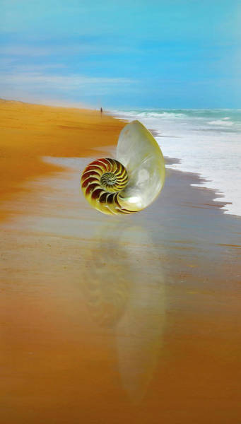 Photograph - Shell Reflections In The Sand Painting by Debra and Dave Vanderlaan