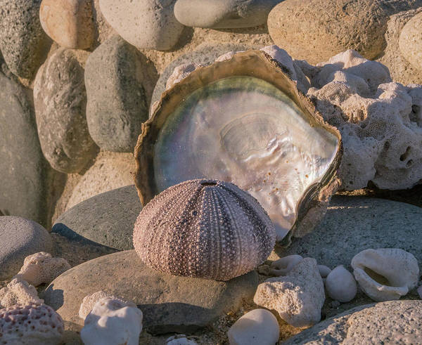 Photograph - Shell Tableau by Jean Noren
