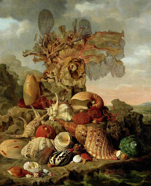 Arthropods Painting - Shells And Marine Plants, 1809 by Henricus Franciscus Wiertz