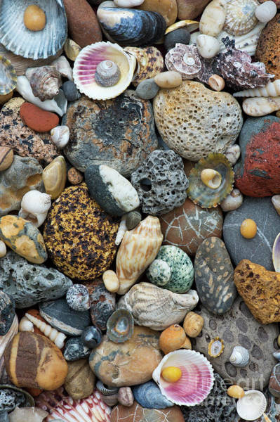 Photograph - Shells And Pebbles Pattern by Tim Gainey